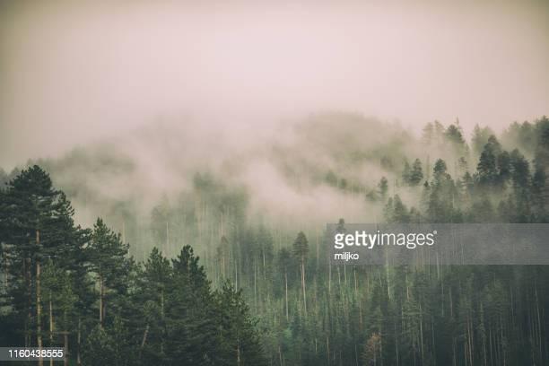 fog and clouds on mountain - fog stock pictures, royalty-free photos & images