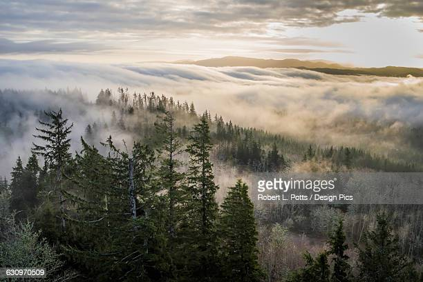 Fog and forest seen from Coxcomb Hill
