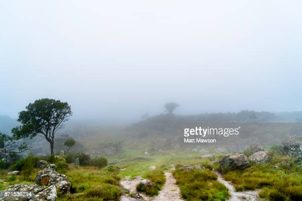 fog and mist in the north eastern south african countryside in mpumulanga province - マプマランガ州 ストックフォトと画像