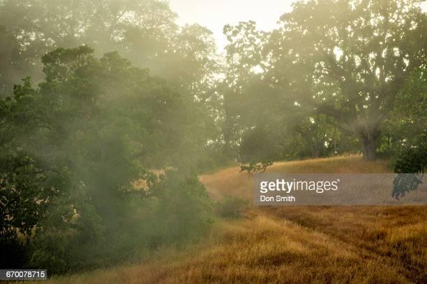 fog and mist - don smith ストックフォトと画像
