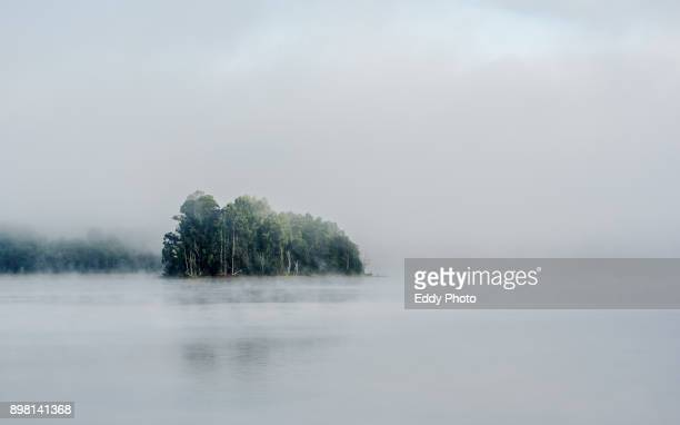 fog at the lake with trees in the background in cecebre galicia spain - duck bird stock pictures, royalty-free photos & images