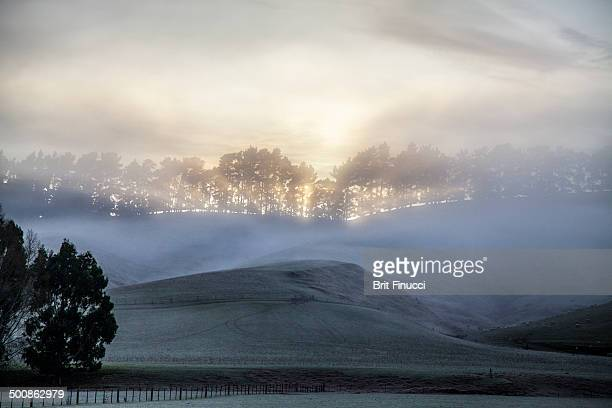 fog clearing over the horizon - dunedin new zealand stock pictures, royalty-free photos & images