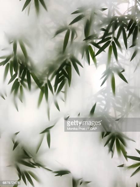 fog covered the bamboo leaves - folha de bambu - fotografias e filmes do acervo