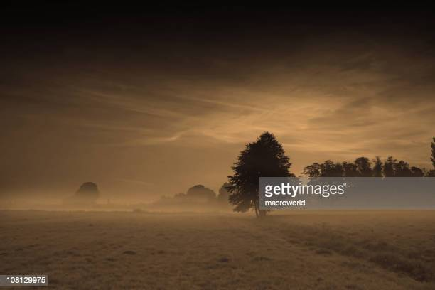fog covering frosted landscape - barossa valley stock pictures, royalty-free photos & images