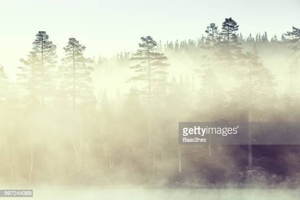 Fog covers the forest