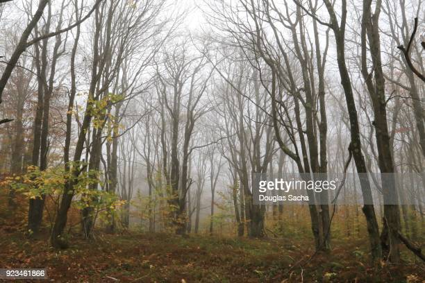fog creates a scary scene in the wilderness - moonlight lovers stock-fotos und bilder