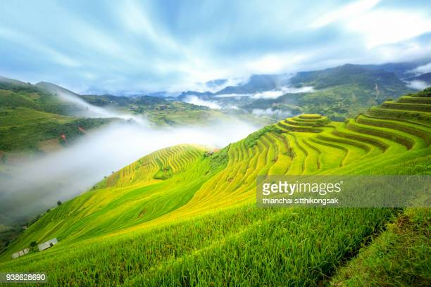 fog flowing in wonderful rice terrace in vietnam - sapa stock pictures, royalty-free photos & images