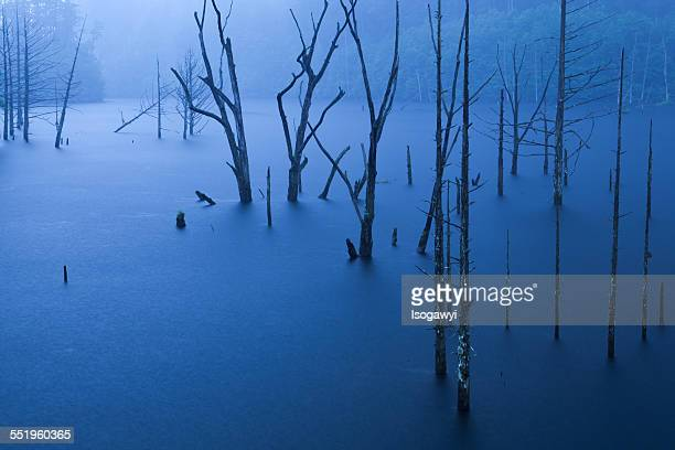 fog forest on the lake - isogawyi stock pictures, royalty-free photos & images