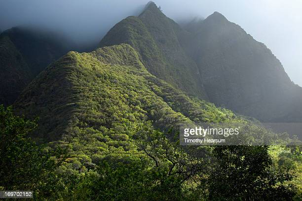 fog hovers above mountains with lush green foliage - timothy hearsum stock pictures, royalty-free photos & images