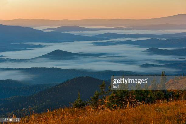 Fog in morning forest