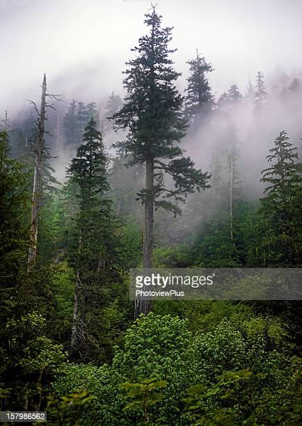 Fog in the Cascades