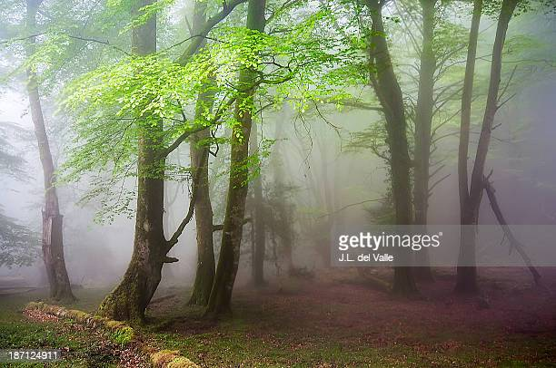 fog in the fores - forens stock pictures, royalty-free photos & images