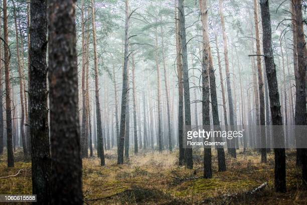 Fog in the forest is pictured on November 10 2018 in Rietzneuendorf Germany