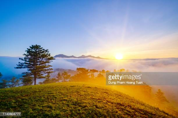 fog in the mountain in the morning at dalat - atmospheric mood stock pictures, royalty-free photos & images