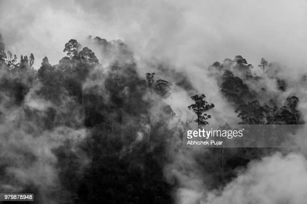 fog in the trees of kodaikanal, kerala, india. - tamil nadu stock pictures, royalty-free photos & images