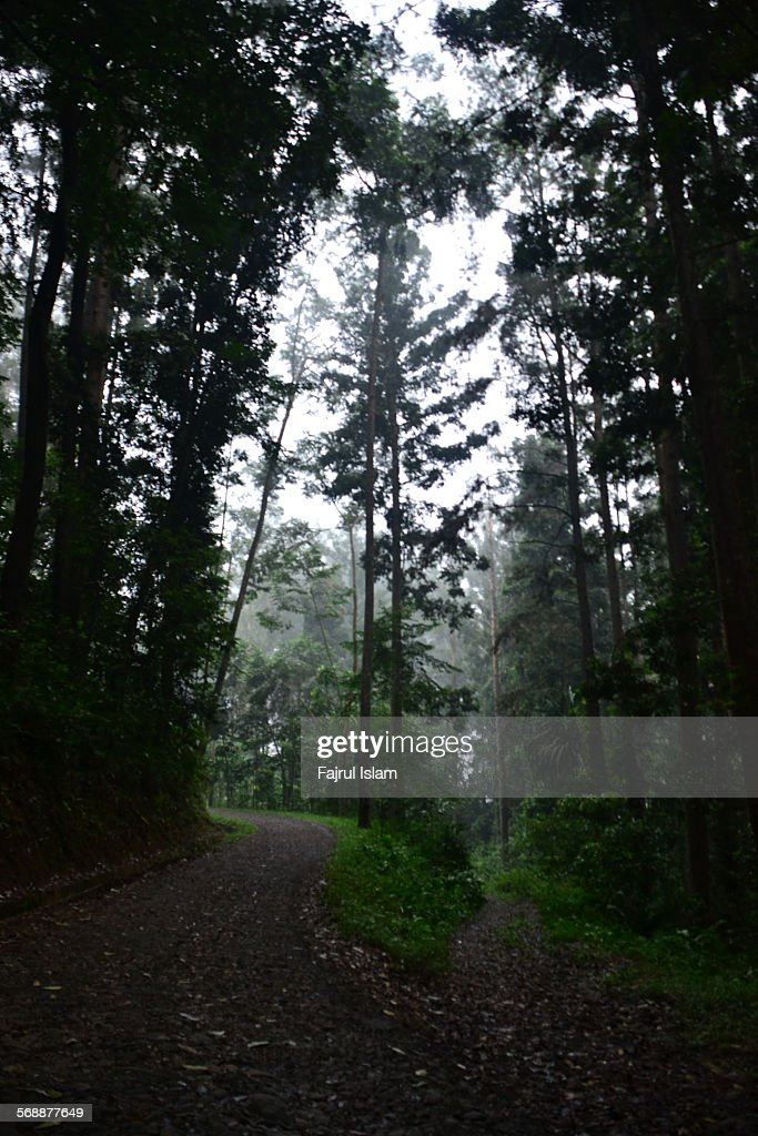 Fog in the tropical rain forest : Stock Photo