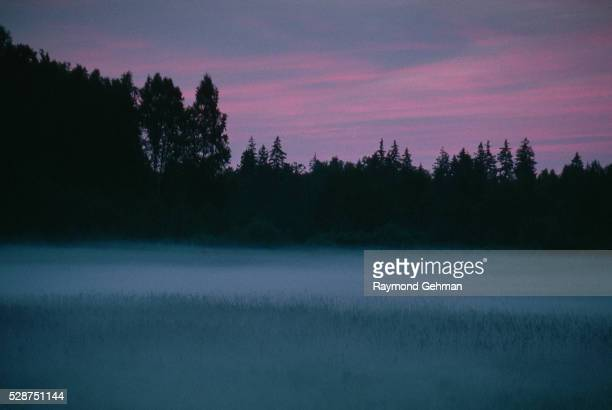 fog in twilight meadow - bialowieza forest stock pictures, royalty-free photos & images