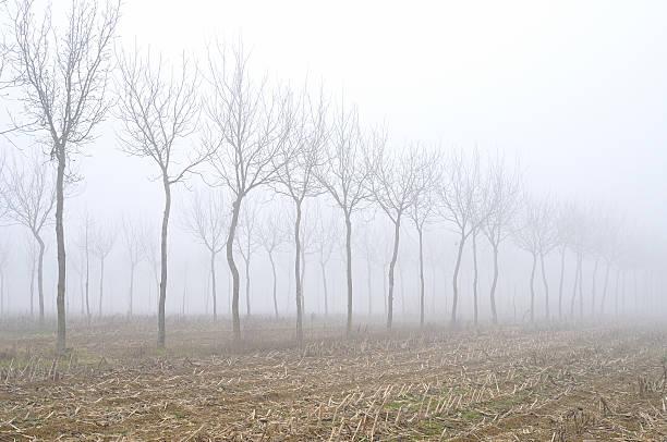 Fog in Val Padana