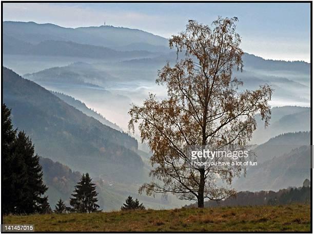 fog in valleys - hope imagens e fotografias de stock