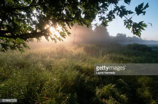 fog lingering over a marsh - lingering stock pictures, royalty-free photos & images
