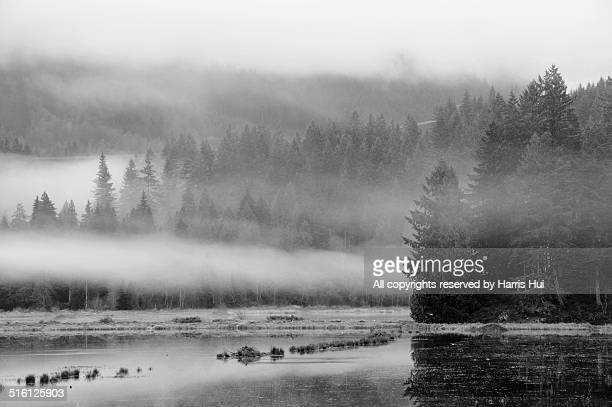 fog moving in - minnekhada park - black and white instant print stock pictures, royalty-free photos & images