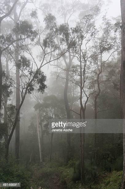 Fog on Mt Mitchell