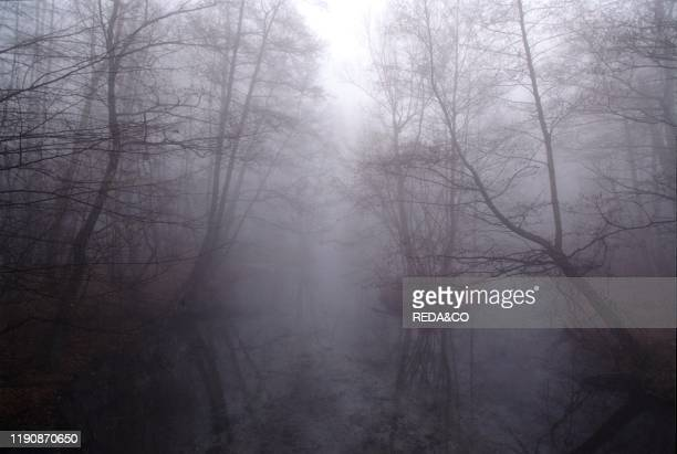 Fog on the river Ticino Park Milano Province Lombardy Italy