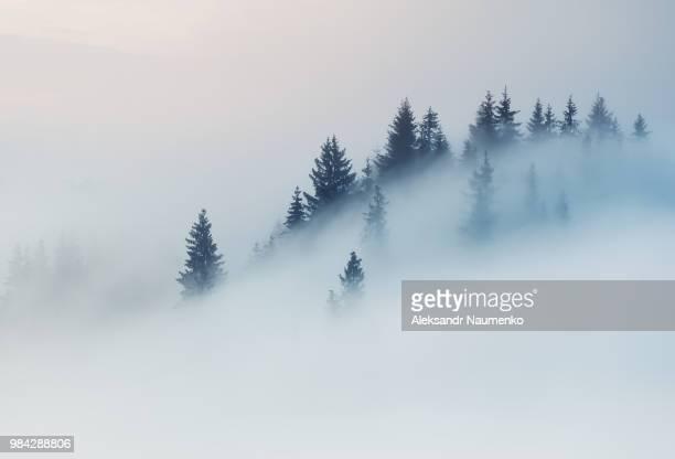 Fog over a mountain in Dzembronyz, Ukraine.