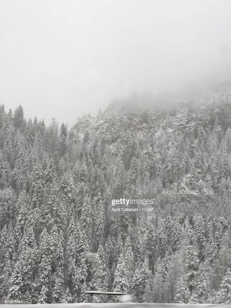 Fog over frozen trees at hill : Stock Photo