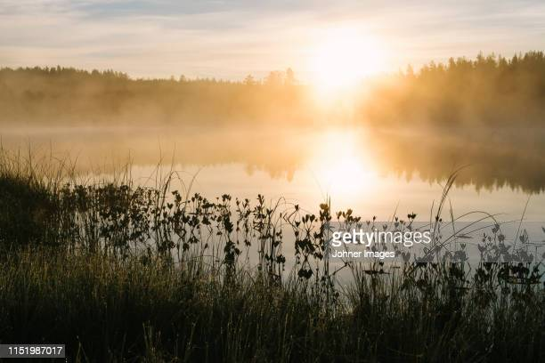 fog over lake - sweden nature stock pictures, royalty-free photos & images