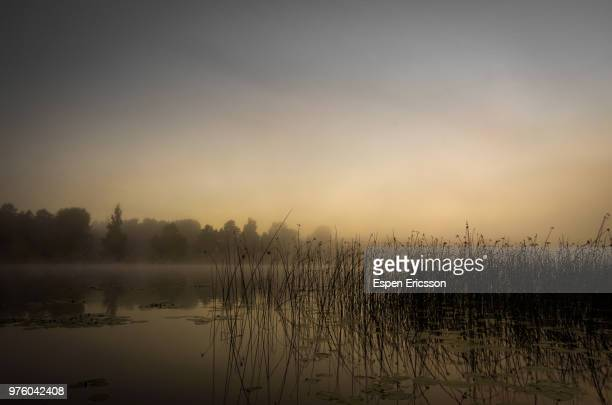 fog over marsh in morning - marsh stock pictures, royalty-free photos & images