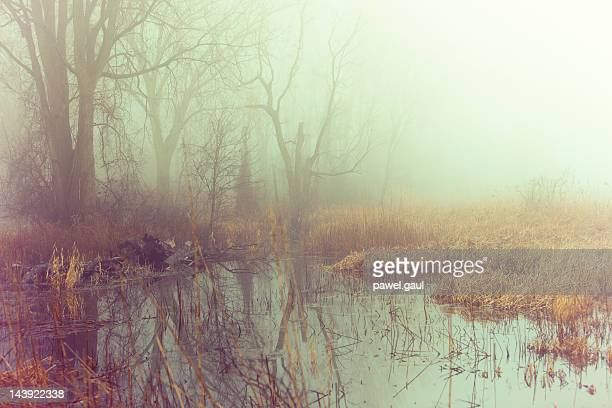 Fog over swamps
