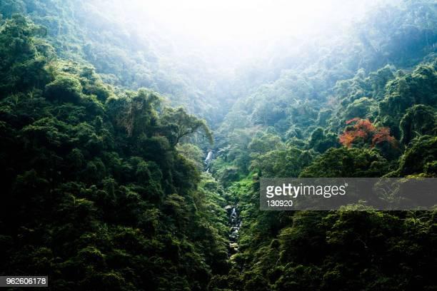 fog over the mountain - spesso foto e immagini stock