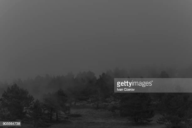 Fog over trees