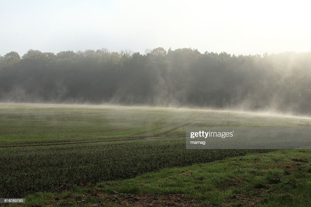Nebel : Stock Photo