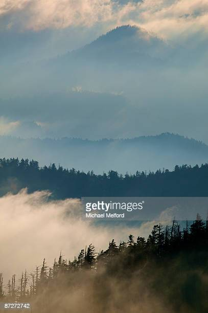 great smoky mountains national park, tennessee. - newfound gap stock pictures, royalty-free photos & images