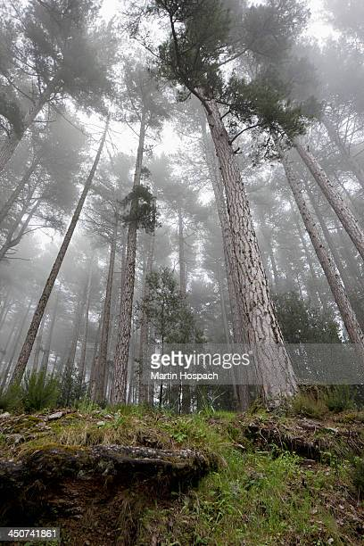 Fog rolling over a forest of trees