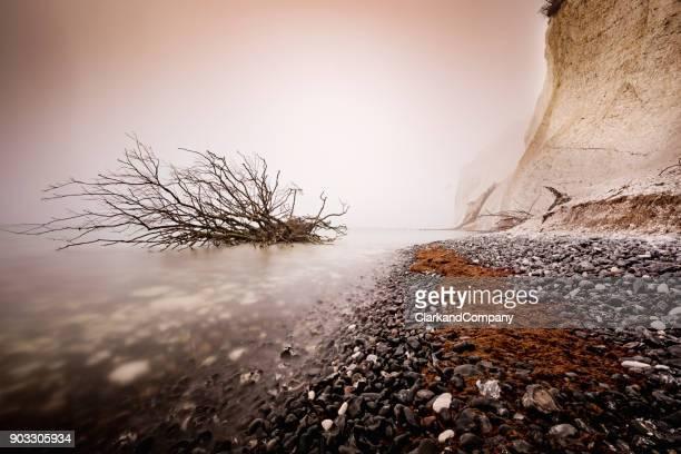 Fog Shrouded Fallen Tree In The Water at  Møns Klint Denmark