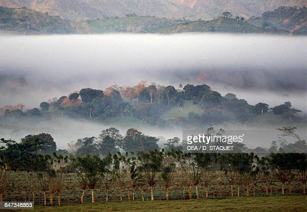 Fog shrouding the trees in the Cibao valley Dominican Republic