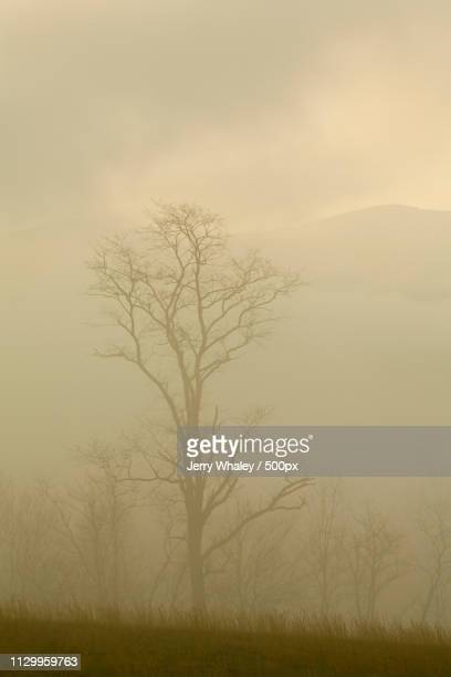 Fog, Spring, Cades Cove, Great Smoky Mountains Np
