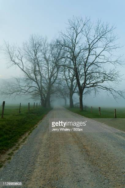 fog, spring, cades cove, great smoky mountains np - cades cove stock pictures, royalty-free photos & images