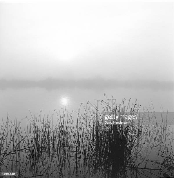 Fog, sun and reeds, San Joaquin delta, California
