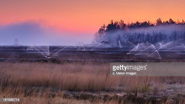 fog, water, brilliance - bog stock photos and pictures