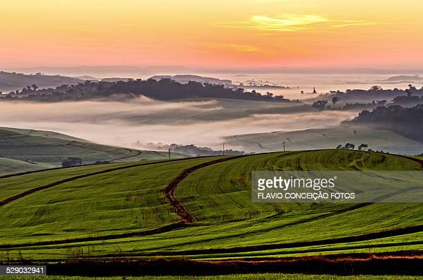 fog wheat fields - londrina stock pictures, royalty-free photos & images