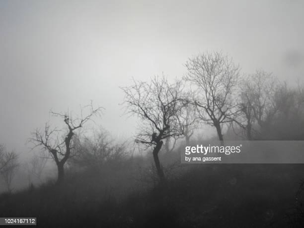 foggy and moody trees