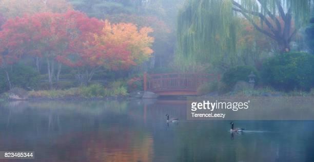 Foggy Autumn Morning in Japan