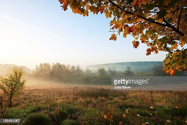 Foggy autumnal landscape
