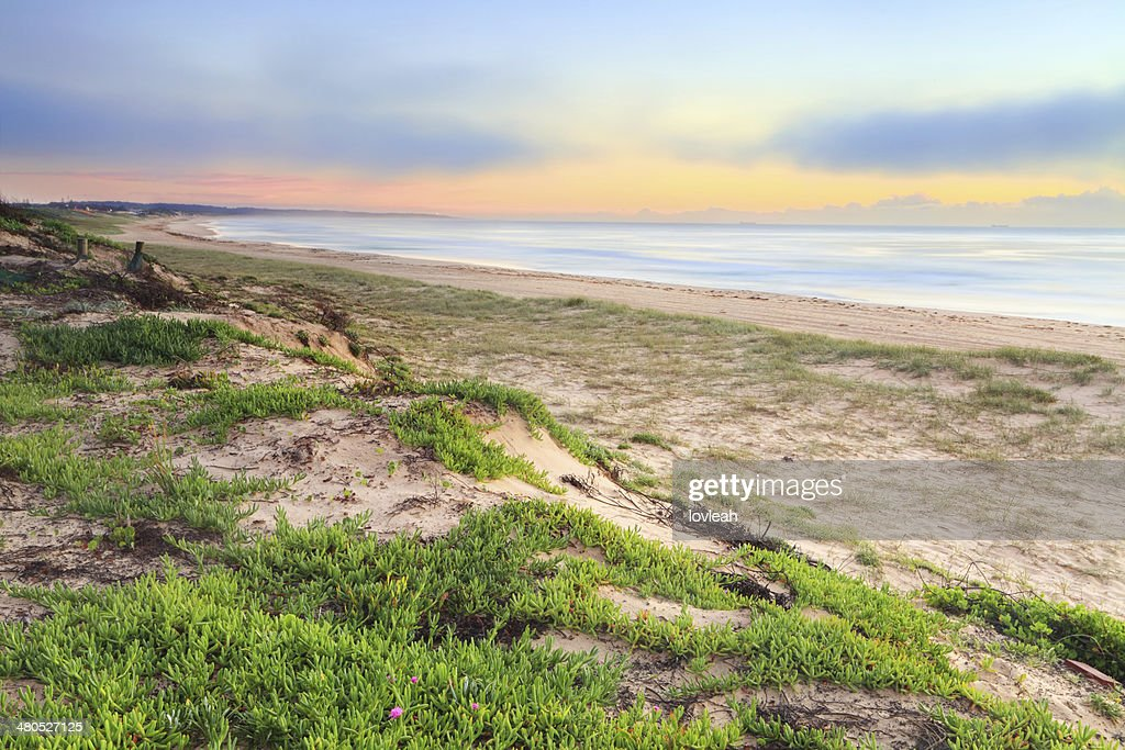 Foggy Beach Sunrise : Stock Photo