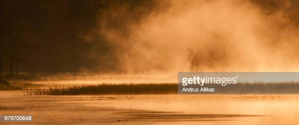 foggy bog, estonia - bog stock photos and pictures