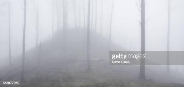Foggy burned trees, Parco de Aventura, Madeira, Portugal